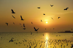 Flying birds over the sea surface. Beautiful sunset and flying birds over the sea surface Royalty Free Stock Image