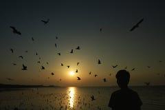 Flying birds over the sea surface. A man watching the Beautiful sunset among flying birds over the sea surface Stock Photos