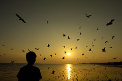 Flying birds over the sea surface. A man watching the Beautiful sunset among flying birds over the sea surface Royalty Free Stock Image