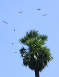 Flying birds with palm Tree Royalty Free Stock Images