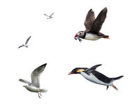 Flying birds: seagull, puffinn, penguin Stock Image