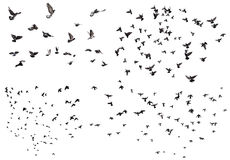 Flying birds set. Silhouettes of flying birds isolated on white Stock Image
