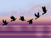 Flying Birds Shows Chill Fall And Frosty Royalty Free Stock Photos