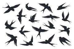 Free Flying Birds Silhouette. Flock Of Swallows, Sea Gull Or Marine Birds Isolated On White Background. Vector Set Of Royalty Free Stock Images - 159151489
