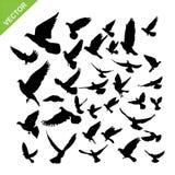 Flying birds silhouette vector. Set of flying birds silhouette vector stock illustration