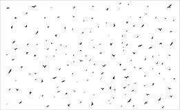 Flying birds silhouettes on white background Royalty Free Stock Photo