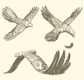 Flying birds, similar to letters. hand-drawn illustration. Vintage Retro engraving Stock Photography
