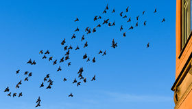 Flying birds in the sky in the morning at sunrise royalty free stock images