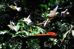 Flying birds Stock Photo