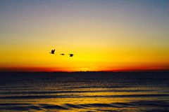 Flying birds with sunrise at Qinghai lake Tibet plateau Royalty Free Stock Images