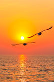 Flying birds with sunset. Seagull flying on the sky with sunset Stock Image