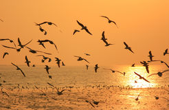 Flying birds in sunset Stock Images
