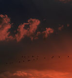 Flying birds at sunset stock photography