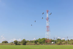 Flying birds with telecommunication tower in rural farmland, pro Stock Image