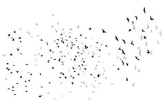 Flying birds vector sketch Royalty Free Stock Image