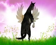 Flying Black stallion Stock Photos