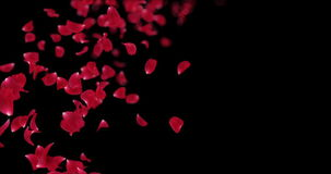 Flying Blurry Red Rose Flower Petals Falling Placeholder Alpha matte Loop 4k. Animation of romantic flying red rose flower petals with place for text backdrop stock video