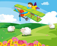 Flying boy. Boy flying over a field with sheep Stock Images