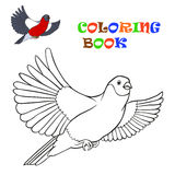 Flying bullfinch - coloring book Stock Photography