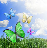 Flying butterflies Stock Image