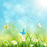 Flying butterflies on blue summer background Royalty Free Stock Images