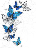 Flying butterflies morpho Stock Images