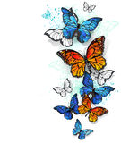 Flying butterflies morpho and monarch Stock Photo
