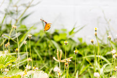 Flying butterfly. On flower Stock Photos