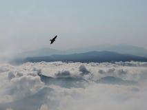 Flying buzzard Stock Photography