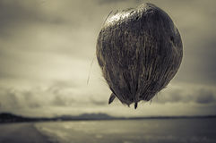 Flying Coconut Stock Images