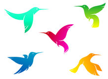 Flying color hummingbirds Royalty Free Stock Photography