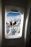 Flying Cow. A flying cow viewed out a plane window stock photography