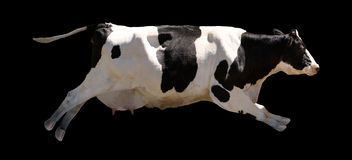 Flying Cow Royalty Free Stock Images