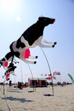 Flying cows. Fun giant colourful black and white cows flying kites, at International Flying Kite Festival of Berck-sur-Mer, northern France, April 2011. Lots of royalty free stock photography