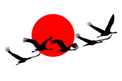 Free Flying Crane. Stock Photo - 55862240