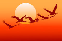 Flying crane. Stock Photography
