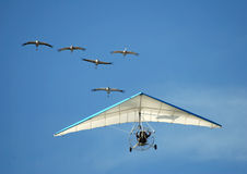 Flying with cranes stock photos
