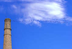 Flying cranes on blue sky and industrial chimney Stock Photography
