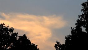 Flying crow between trees - clouds. Flying crow between trees background clouds stock video