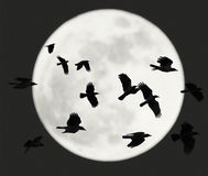 Flying crows with full moon royalty free stock photos