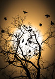 Flying crows silhouette Royalty Free Stock Images
