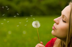 Flying dandelion. Girl blowing dandelion in the field Royalty Free Stock Photography