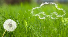 Flying Dandelion S Seed Form Of A Car Royalty Free Stock Image