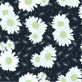 Flying of dandelion seeds and daisy flowers on dark blue background royalty free illustration