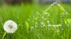 Flying dandelions seed form house Royalty Free Stock Photography