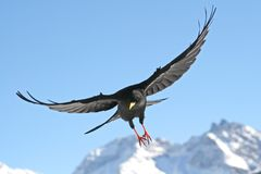 Flying bird stock images