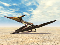 Flying Dinosaur Pteranodon Royalty Free Stock Image