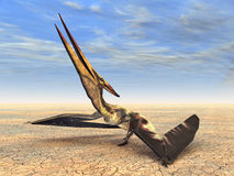 Flying Dinosaur Pteranodon. Computer generated 3D illustration of the flying Dinosaur Pteranodon Royalty Free Stock Photo