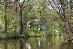 Flying dinosaur on the river Kamienna in Baltow, Poland Stock Photography