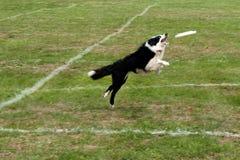 Flying Dog Royalty Free Stock Images